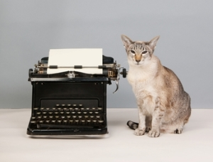 Cat and Typewriter